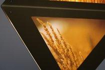 TRON Front Print Backlit Film adhésif
